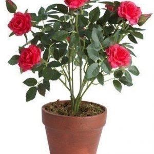 KJ Collection Kukka Ruusu Cerise 33 cm