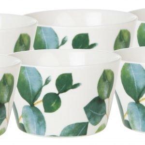 Koti Eucalyptus Kipot 6 Kpl