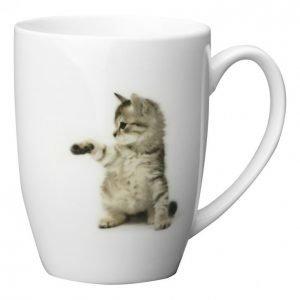 Kotikulta Kissat Muki 3